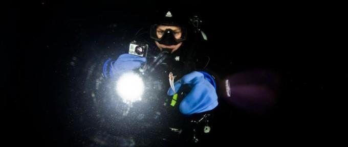 """Sjøengel under isen ved polarskipet MAUD Les mer om nakenvingesneglen """"SEAANGEL"""" på http://en.wikipedia.org/wiki/Sea_angel"""